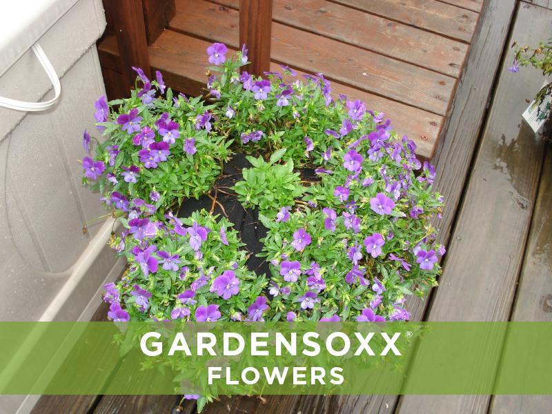 GardenSoxxFlowers_4.jpg