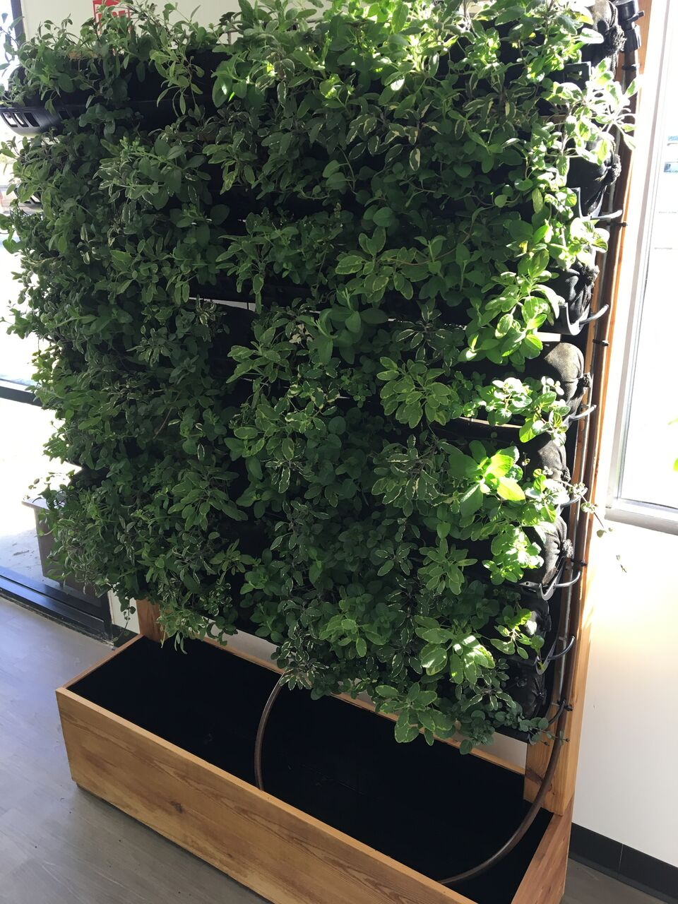 unit grown out in herbs.jpeg