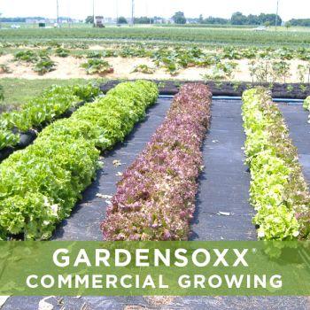 commercial growing Gardensoxxx.jpg