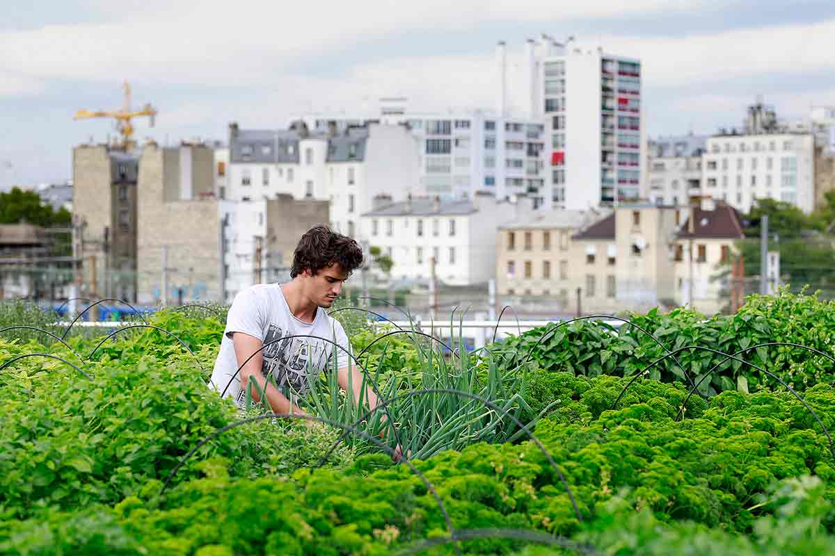 This file photo shows an employee of urban farming start-up Aeromate checks on vegetables and aromatic herbs growing on the rooftop of a building owned by French public transport group RATP as part of a rooftop farming project in Paris on 24 August, 2017. (Benjamin Cremel / AFP Photo)