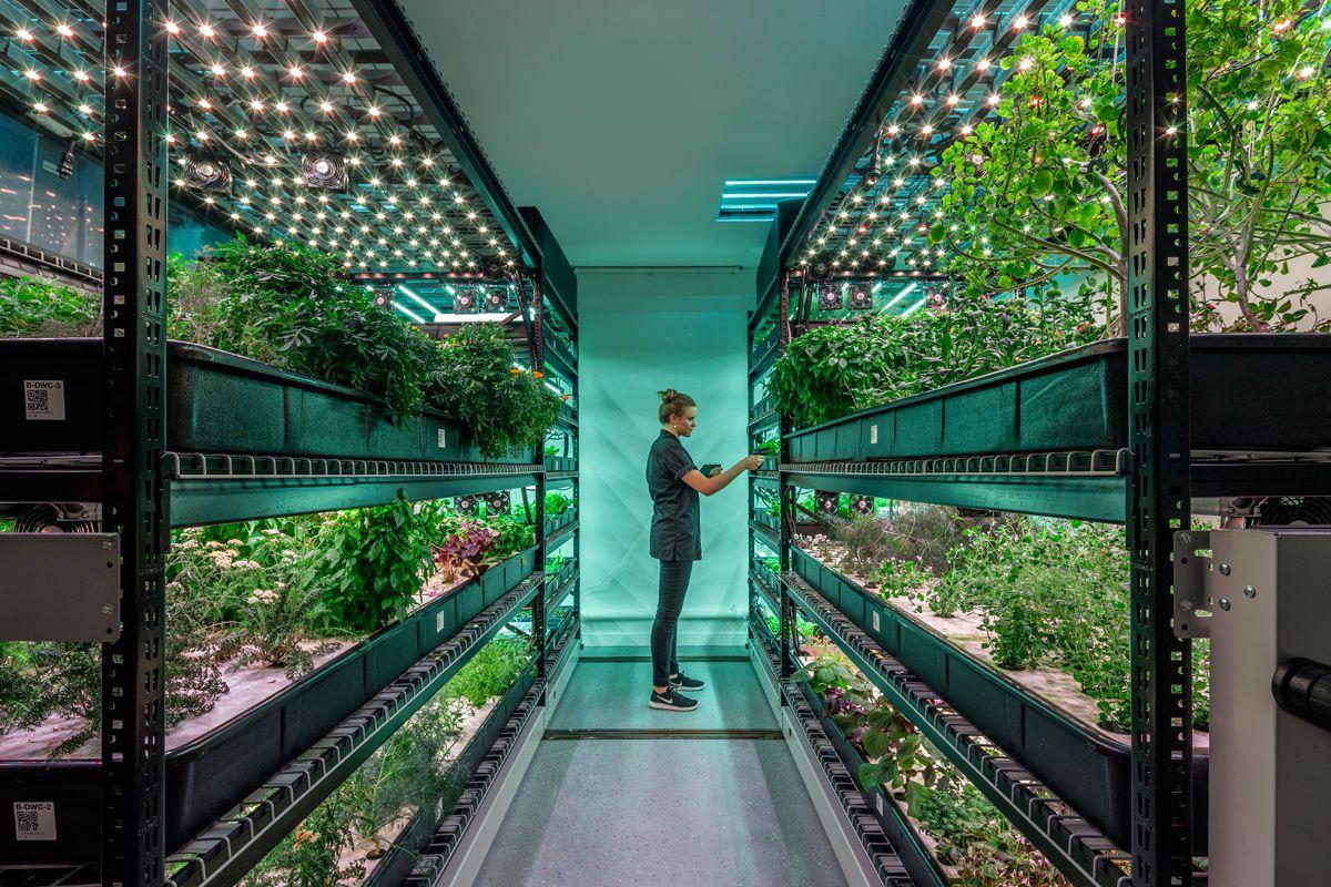A vertical farming setup from farm.one | Photo courtesy of farm.one