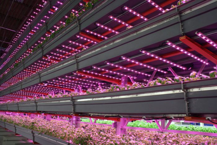 An LED-lit indoor farming operation | Photo courtesy of Agritecture