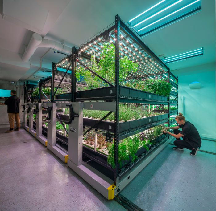 A vertical farming operation from farm.one | Photo courtesy of farm.one