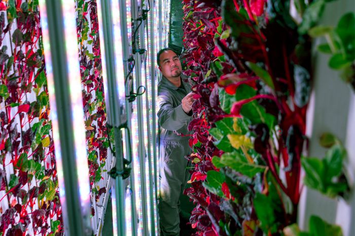 Tending to a vertical farm from SF-based startup Plenty | Photo courtesy of Plenty