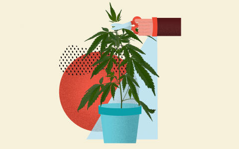 how-to-top-cannabis-plants_header-copy@2x-1-480x300.png