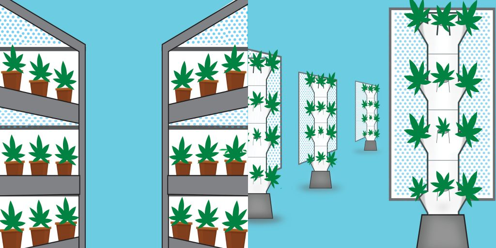 Stacked vertical (left) and true vertical (right) cannabis grows with LEDs. (Sean Walling/Leafly)