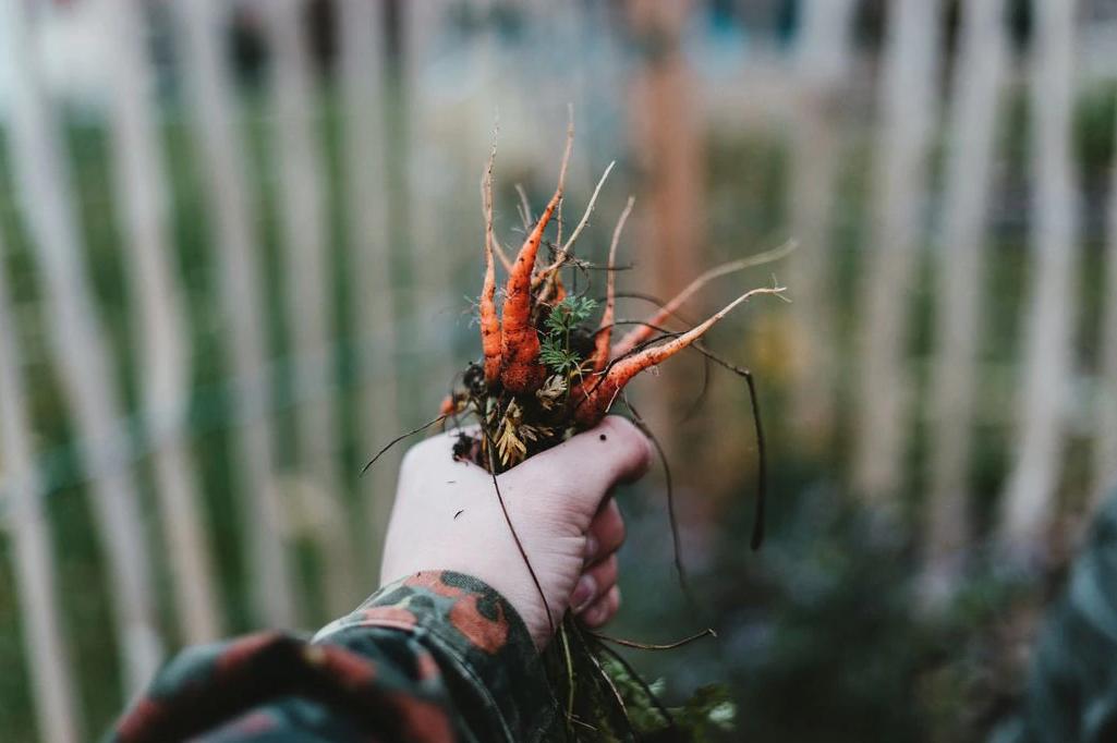 You can get your hands dirty no matter where you live.Julian Hochgesang via Unsplash