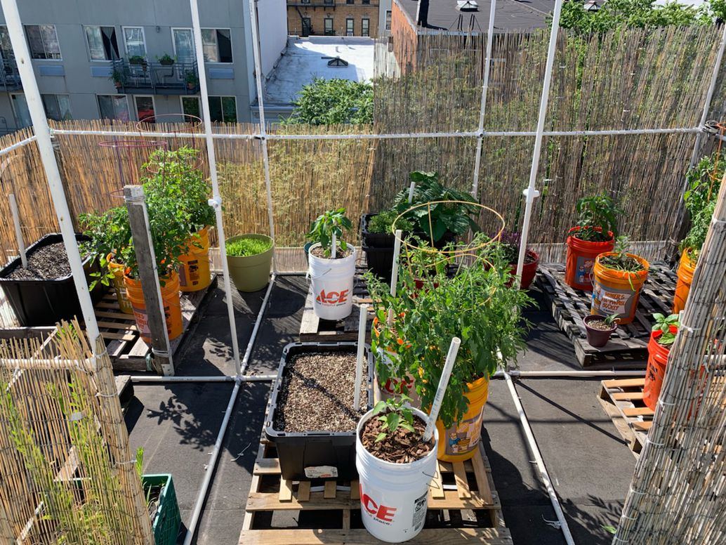 Self-watering containers, like those seen here, mean that even if you're not always around to take care of your garden, your plants will still have enough to drink. Ryan Boysen