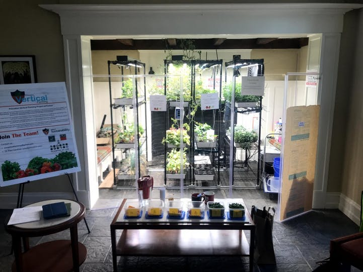 A taste test set up at the Forbes College vertical farm for Akiti's thesis project.    Photo Courtesy of Kor Akiti