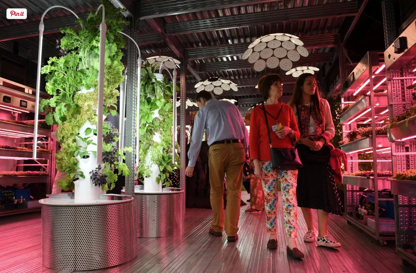 Visitors look at vegetables growing under artificial light on a vertical farm, in the IKEA: Gardening Will Save the World garden, in London on May 20th, 2019. (Photo: Daniel Leal-Olivas/AFP/Getty Images)