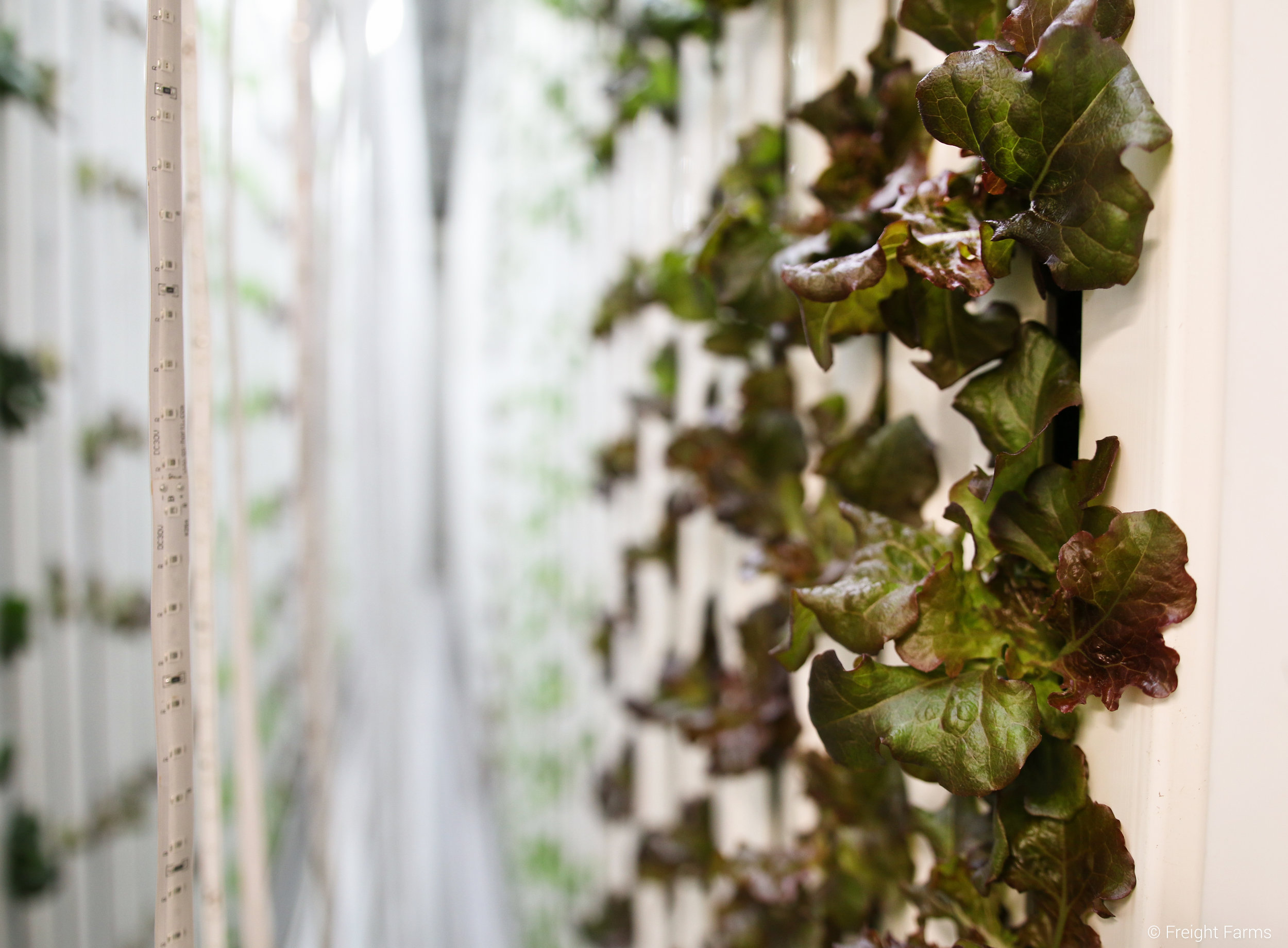 Freight Farms Mature Plants 2.jpg
