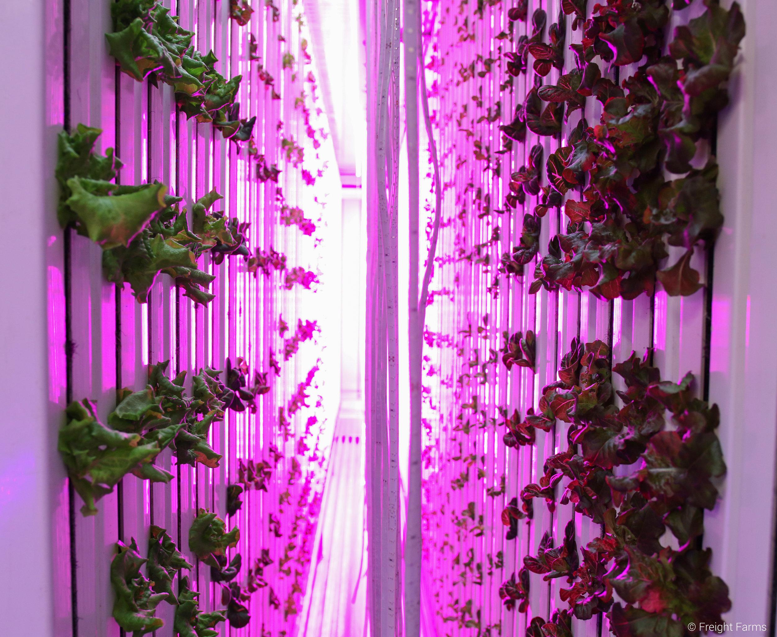 Freight Farms LED Lights 2.jpg