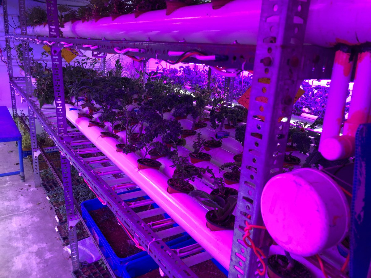 Different types of vegetables, mostly non-seasonal, are grown at this vertical farm at the Site Industrial Area of Karachi, where light, humidity and temperature is optimally controlled. September 26, 2019. (AN Photo)