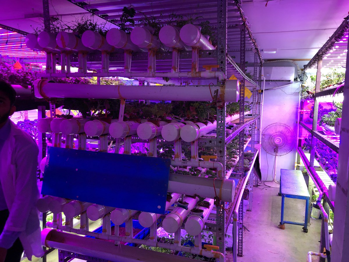 Different types of vegetables, mostly non-seasonal, are grown at this vertical farm at the Site Industrial Area of Karachi, where light, humidity and temperature is optimally controlled. September 26, 2019. (AN Photo