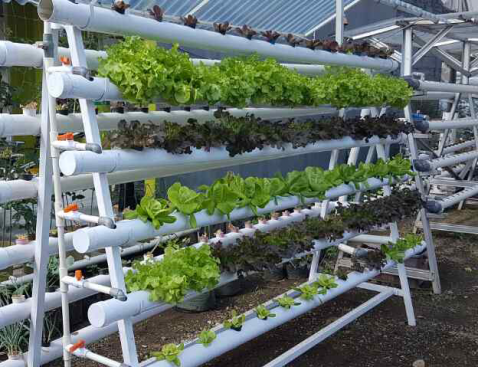 Why Local Farmers Can't Adopt Vertical Farming System — iGrow