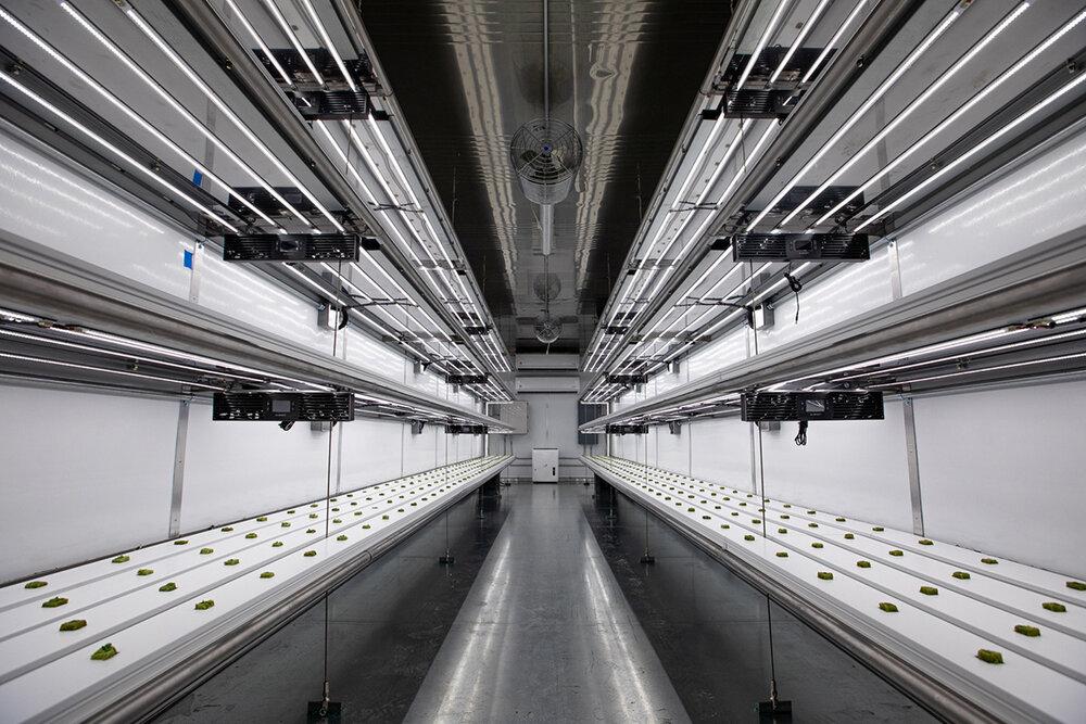 Top 7 Vertical Farming Companies Igrow