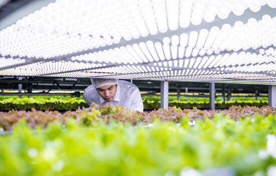 iGrow-Indoor Vertical Farming News-iGrow
