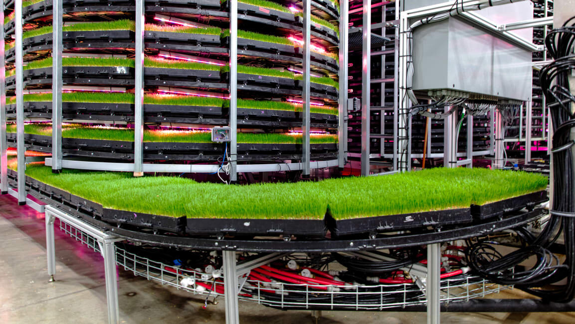 VIDEO: We Use An Exceptional Amount of Land To Grow Food For Sows. Vertical  Farms Could Change That If We Used Them To Grow Cow Feed — iGrow