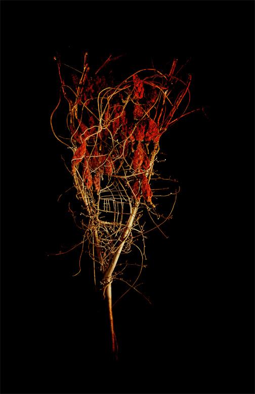 Amber Sumac, Photograph/Sculpture, Robert Hite, 2008