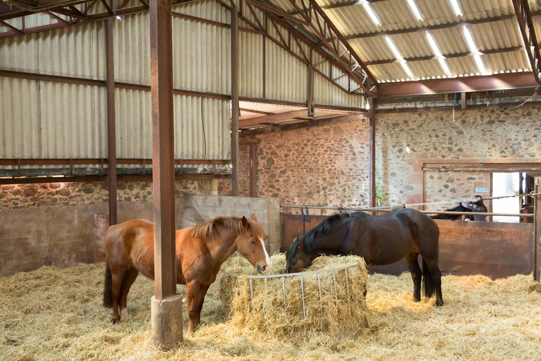 Eat-Sleep-Ride-Horse-training-disadvantadged-haugh-head-farm-danielle-pictorial-photography--049.jpg