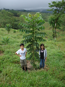 Mahar Sperling and Ashley Perez stand next to one of the trees they planted a year ago. As a sapling it was no higher than the top of Mahar's boot, one year later it is over 10 feet high. The rate of growth in the tropical rain forest is truly amazing. (2008)