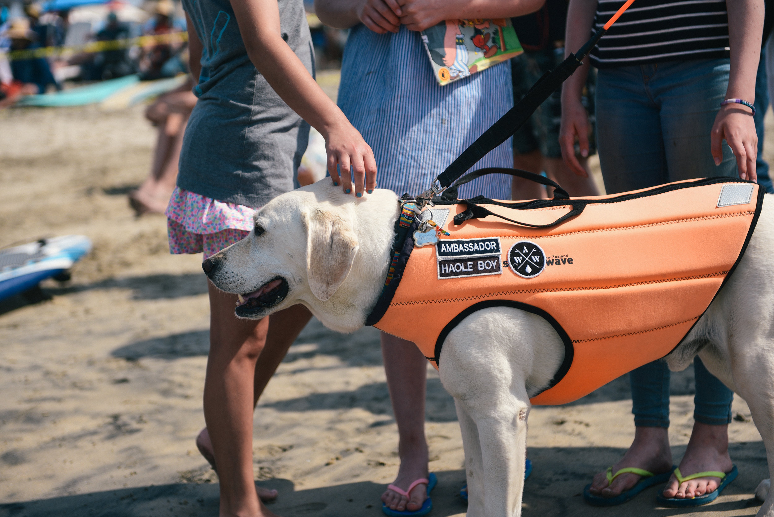 Haole Dog Surfing Competition