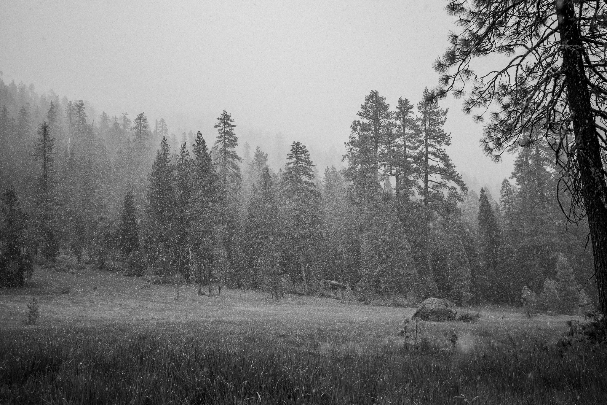Unexpected snowstorm in June in the Trinity Alps.