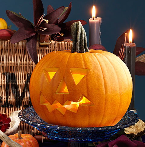CM3QV7dRfmL0Oq5IiNew_biscuit-and-pumpkin-carving-side-01.jpg