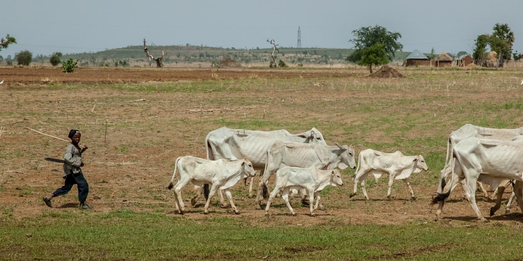 Young Fulani herdsman, escaping famine in Nigerian desert