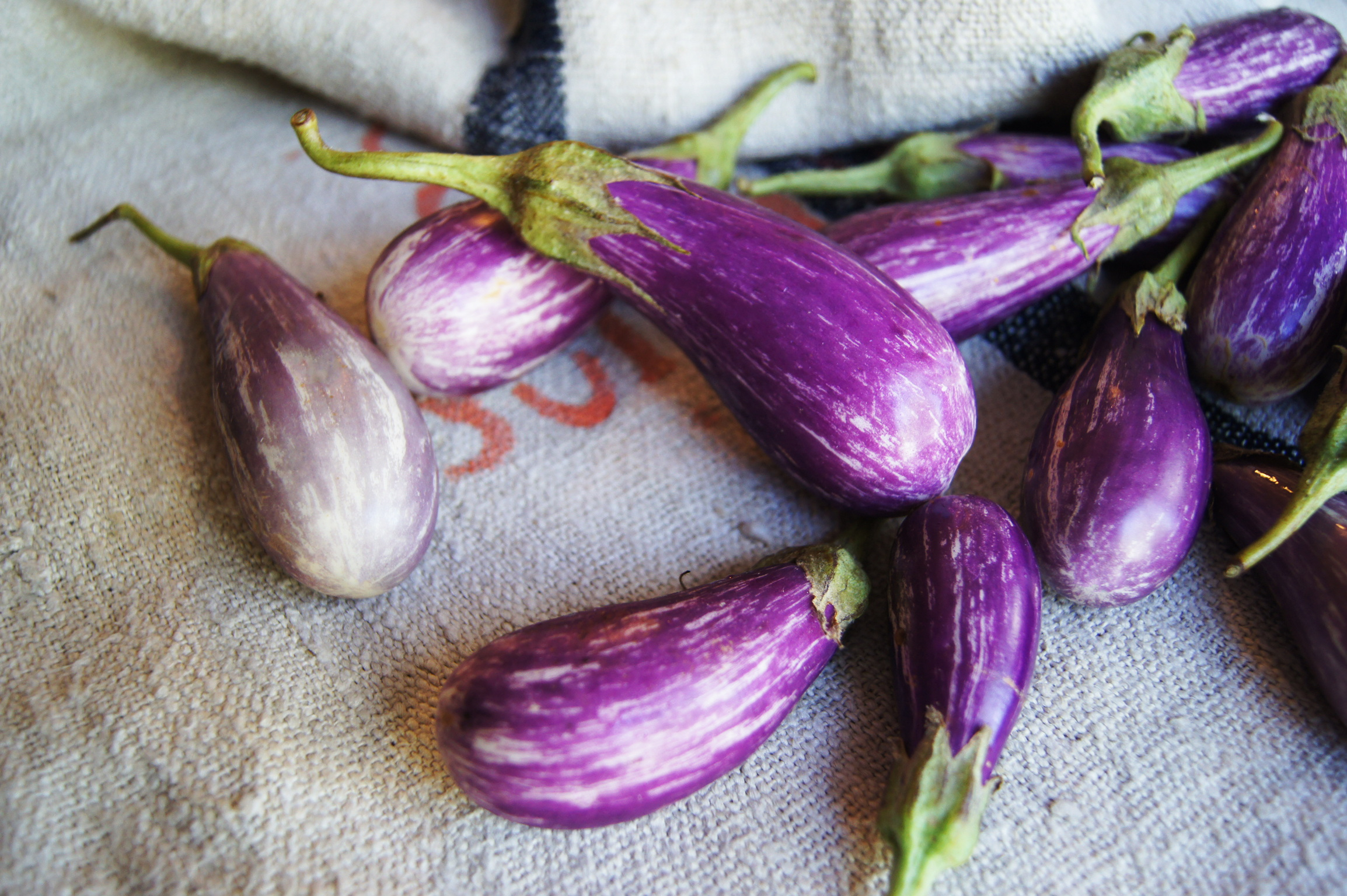 Fairytale Eggplant   /  Stone Hollow Farmstead CSA