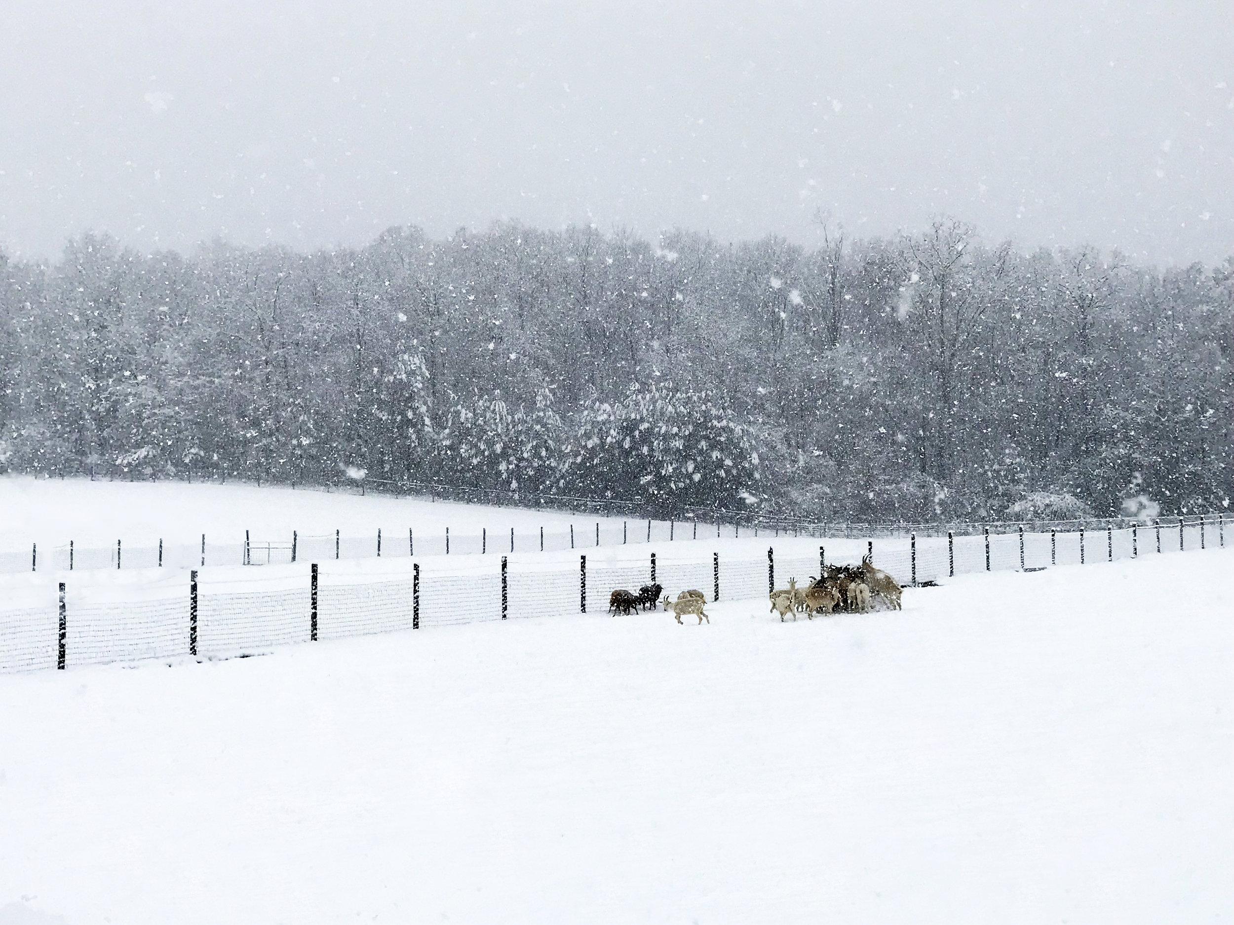 SHF snow photo 8.jpg