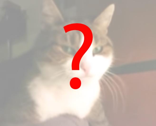 cat_q.jpg