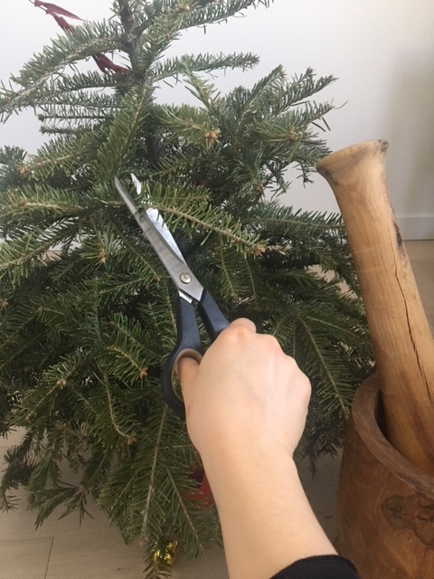 Sharp scissors to cut the branches