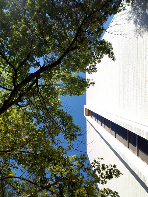 BuildingAndTrees.jpg