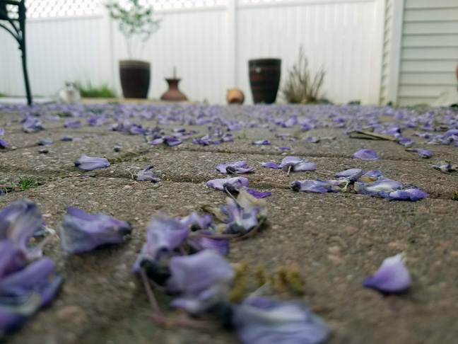 Lovely petals on the ground