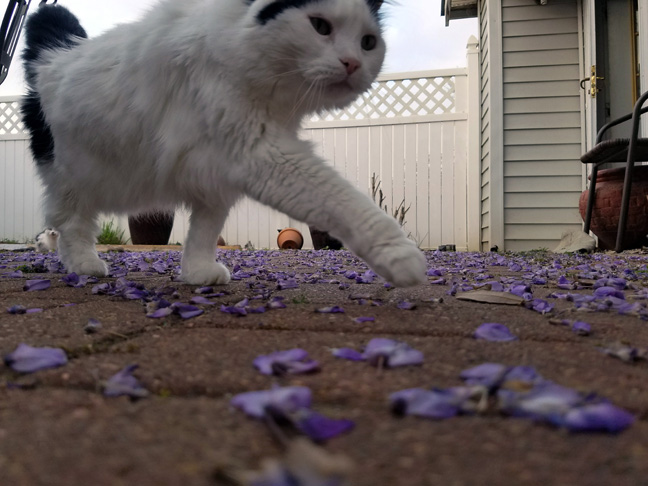 And, one can't lay down to take pictures of petals at the ground level without the cats needing to investigate your behavior.