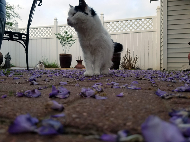 Cats and wisteria petals