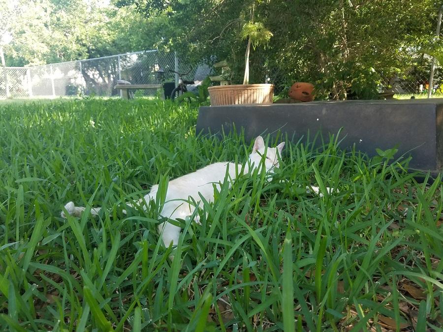 Carmela in the Grass
