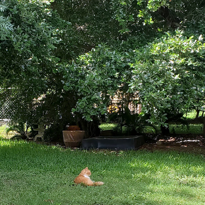 PumKin - Cat in the Shade