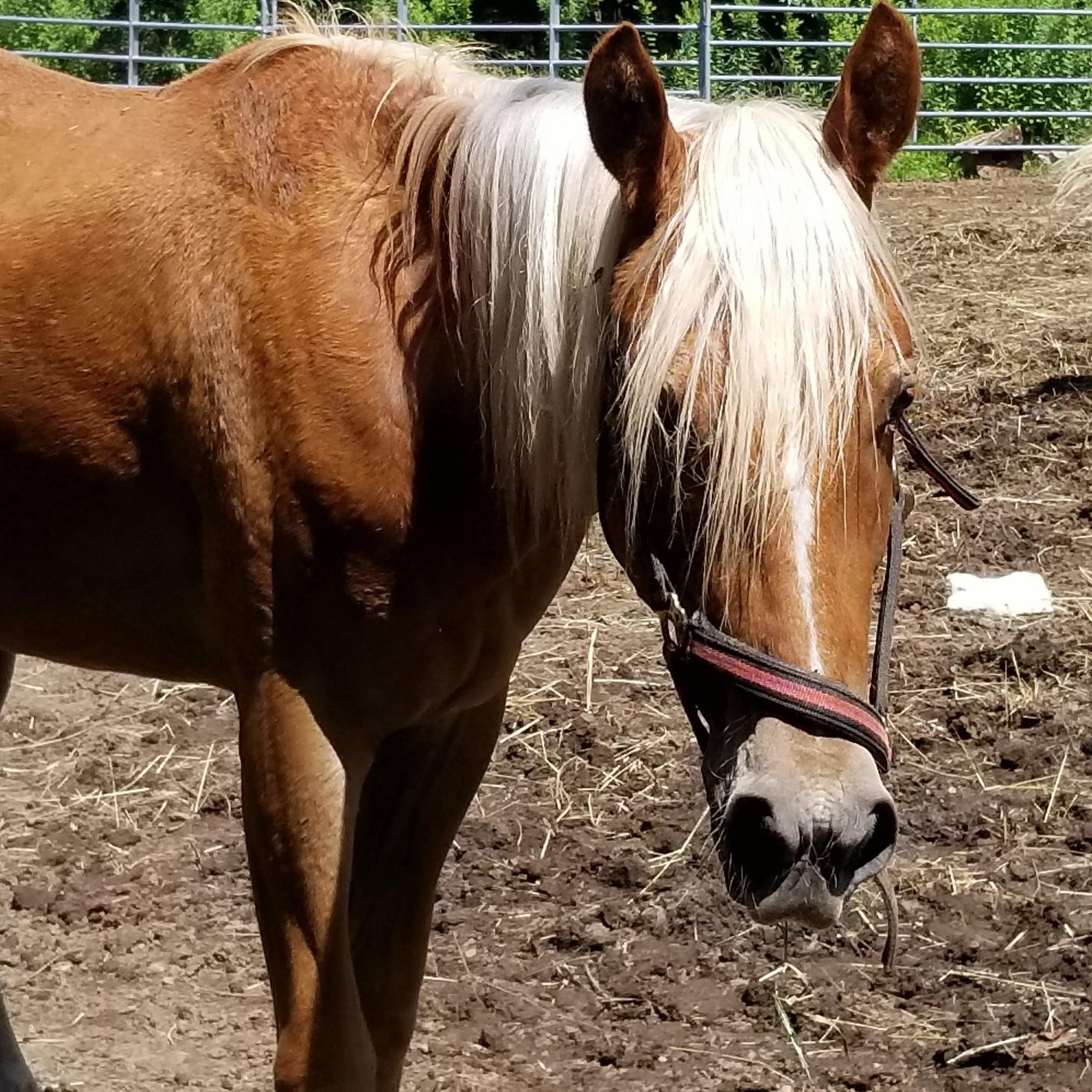 Liam, the horse