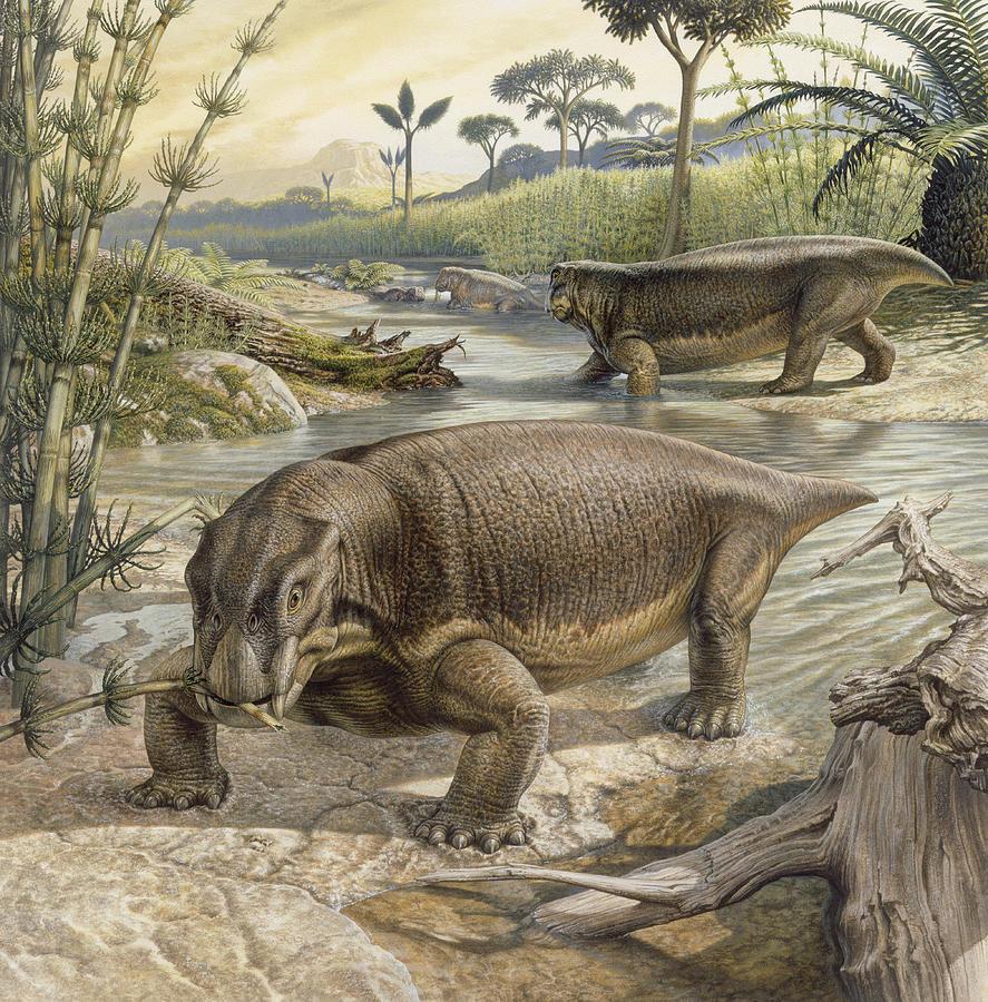 """©John Sibbick, """"Lystrosaurus"""""""