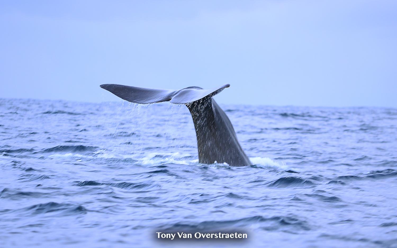whale tail 2.jpg