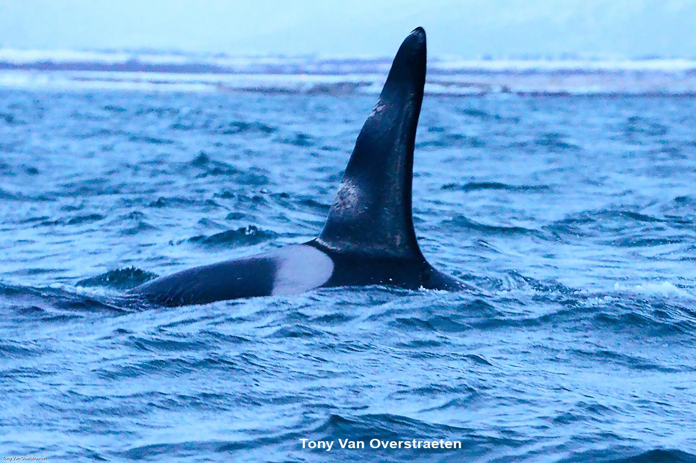 orca 7.jpg