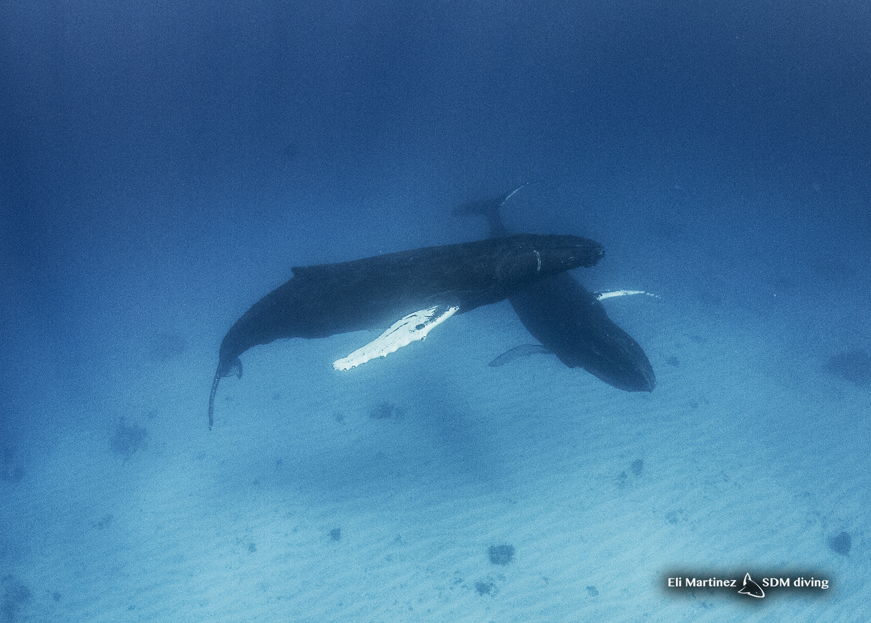 two humpbacks.jpg
