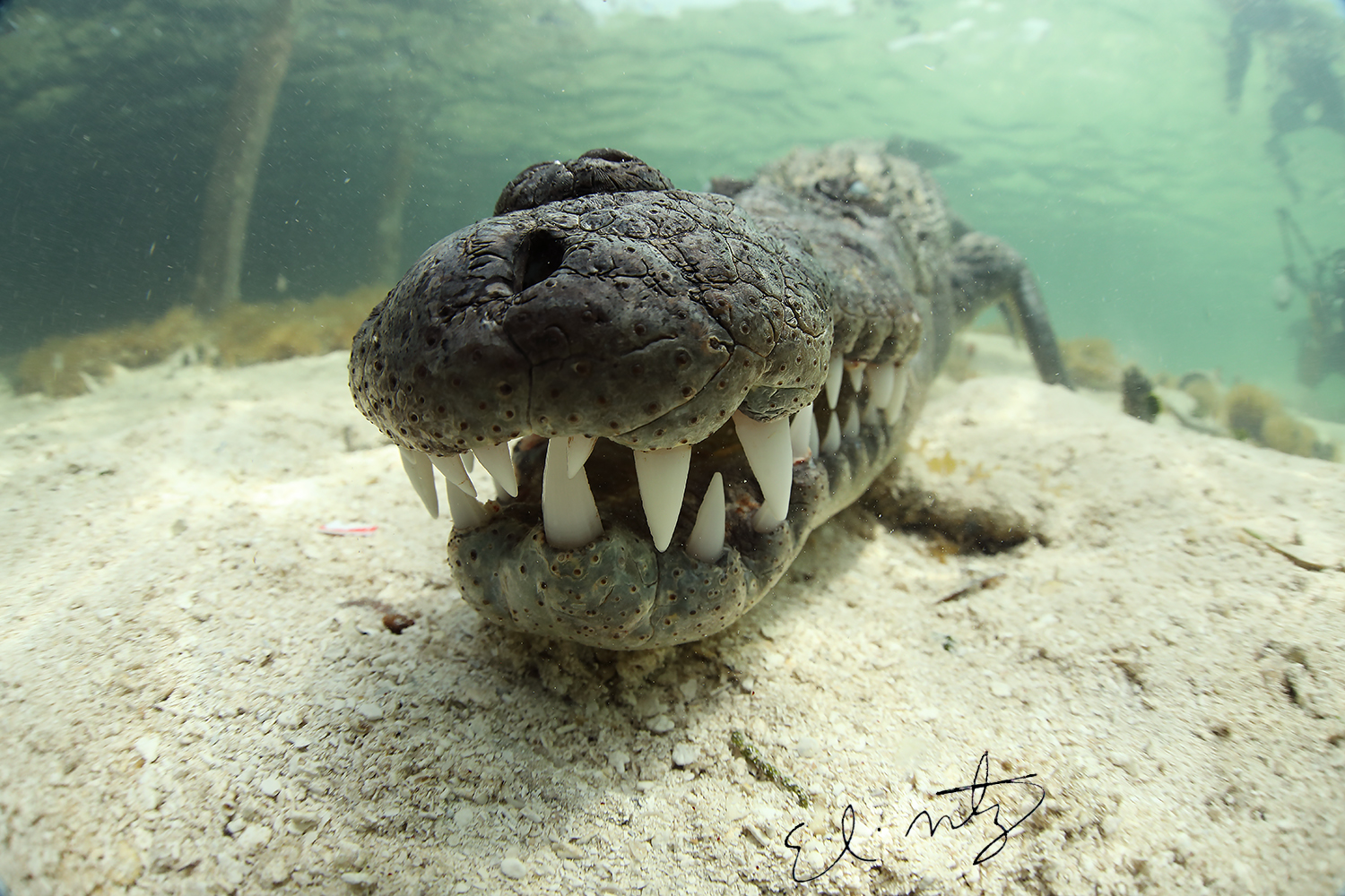 in your face croc.jpg