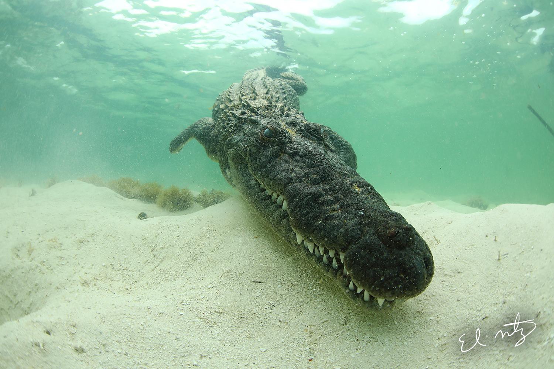croc 3.jpg