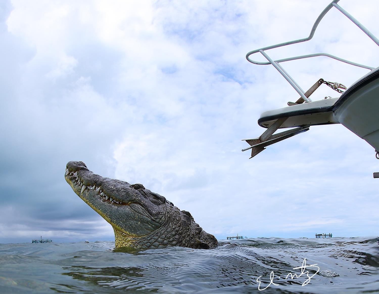 croc head.jpg