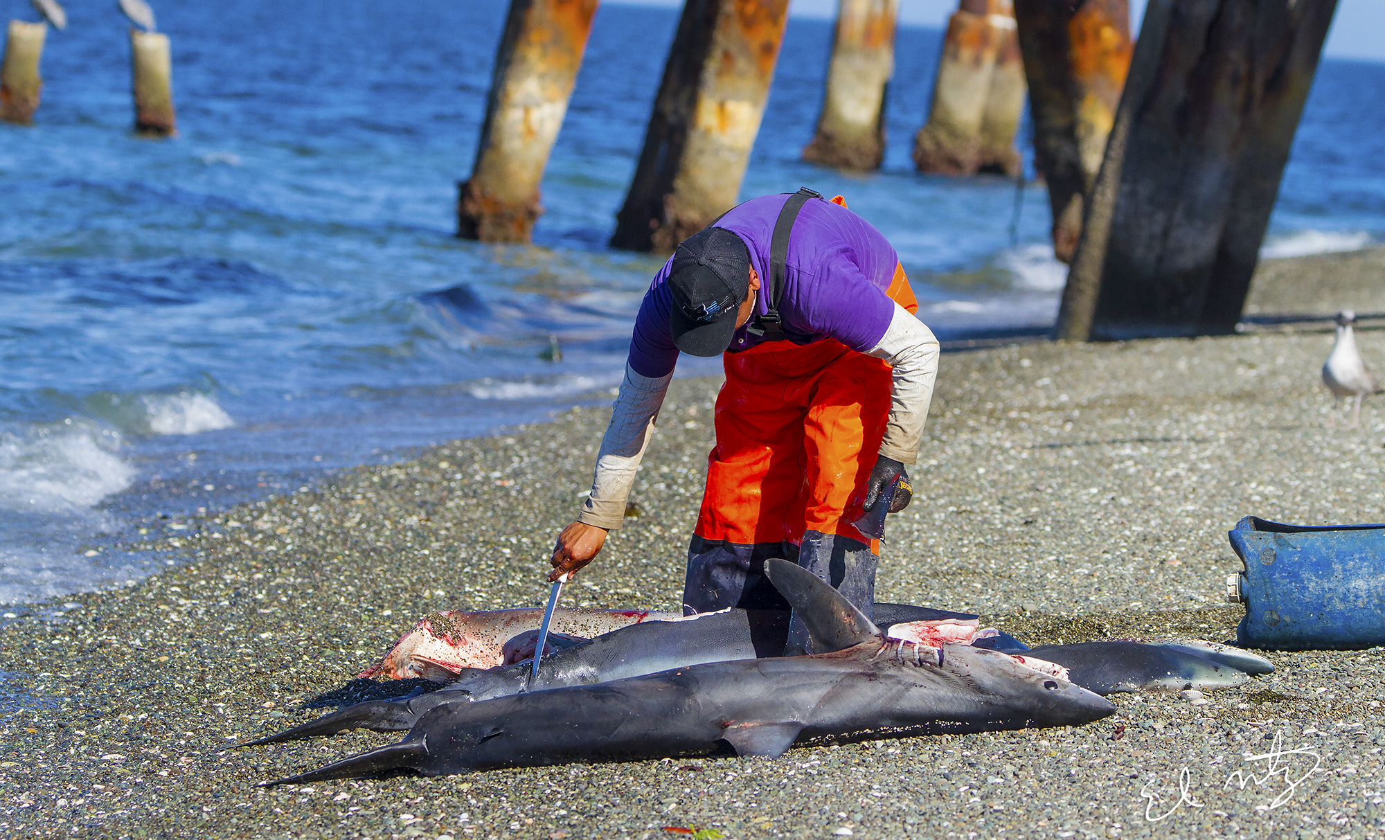 shark fisherman.jpg