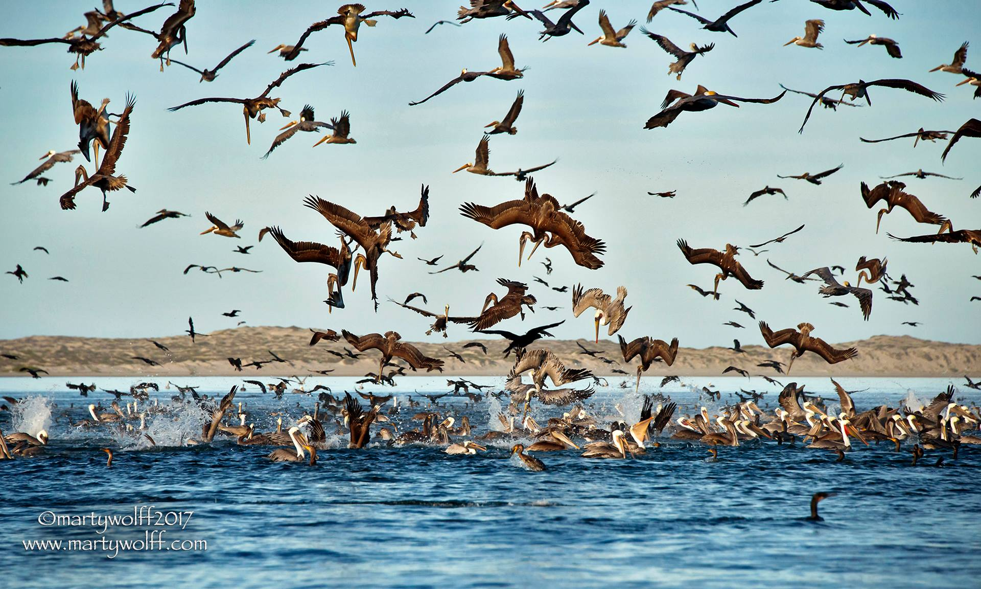 Bird baitball...Image by Marty Wolff
