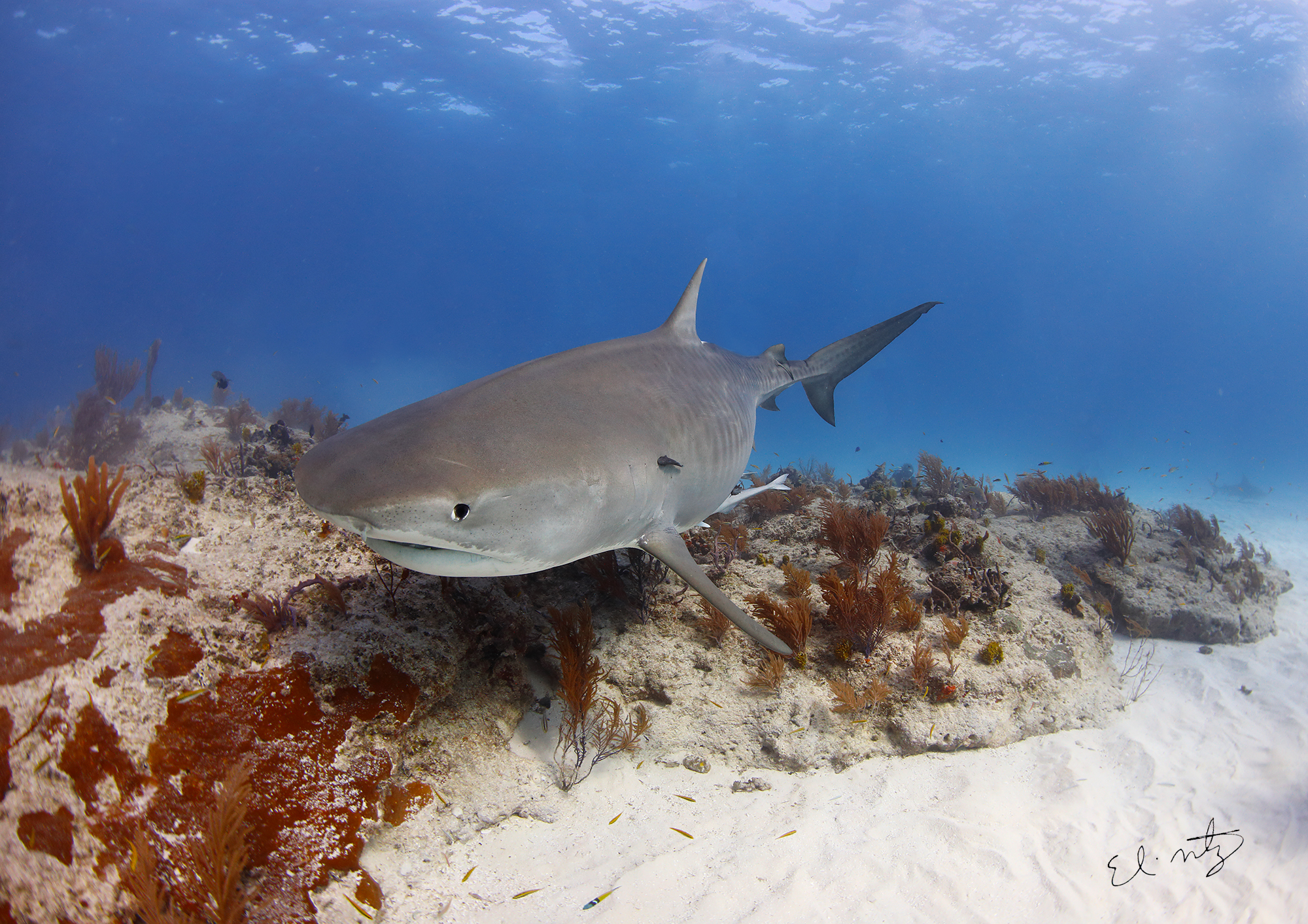 tiger reef 2.jpg